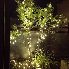 クリスマスモードの木