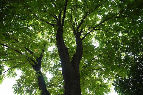 木々の写真