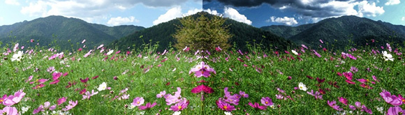 HDRフィルタで美しい写真加工のSnapseed