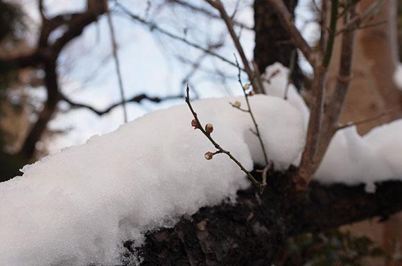 a16-snow4a