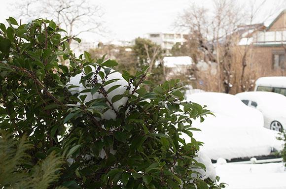 葉っぱに積もる雪