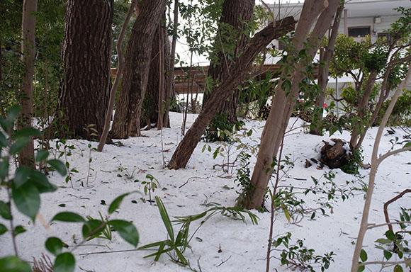 森林も雪で覆われて