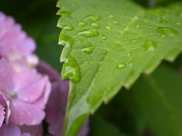 葉をマクロ撮影