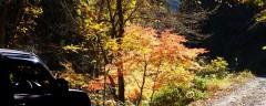 道志の森で紅葉を満喫
