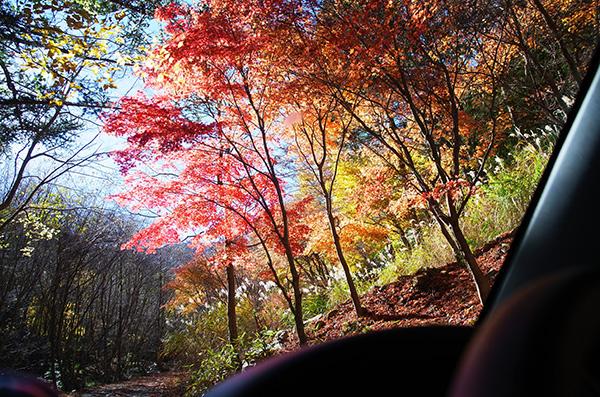 道志西沢線で車窓からの紅葉
